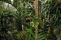Jungle Room at USBG Conservatory (8371514722).jpg