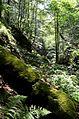 Kanjon reke Samokovke DSC 0324.jpg