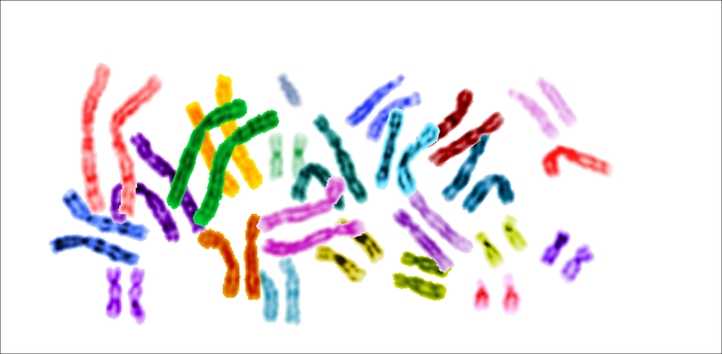 File:Karyotype color chromosomes white background.png