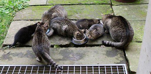 Katzenbauernhof