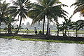 Kerala backwater 20080218-10.jpg