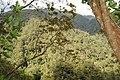 Kinabalu Headquarters - Sabah - Borneo - Malaysia - panoramio.jpg