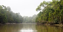 Boating down Kinabatangan River