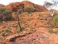 Kings Canyon, Australia, 2004 - panoramio (7).jpg
