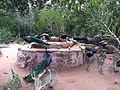 Kish Island Bird Garden, Persian Gulf, 2014.jpg