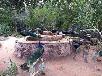Kish Island - Kish Island Bird Garden, 2014
