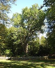 Knightwood Oak.jpg