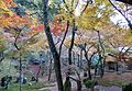 Komyozenji Temple November 2012 06.jpg