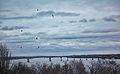 Kostroma 016.jpg