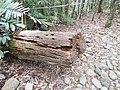 Kuranda QLD 4881, Australia - panoramio (56).jpg