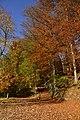 L'arbre au feuillage brun (22186959704).jpg