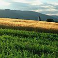 Lúky pri západe - panoramio.jpg