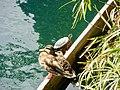 LACA LakeSantaYnezAnimals 2017.jpg