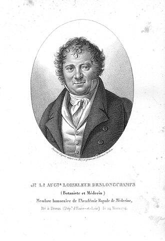 Jean-Louis-Auguste Loiseleur-Deslongchamps - Image: LOUIS AUGUSTE gris