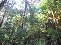 La Amistad Panama Biosphere Reserve - Parque Nacional Volcan Baru (a core zone) 38.JPG