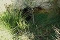 La cueva de agua potable escondida - panoramio.jpg