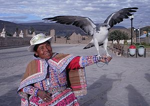 Colca Canyon - Woman with a tame hawk in Yanque, one of the three main tourist towns of the Colca Canyon