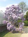 Laika ac Royal Greenhouses of Laeken (6317146174).jpg