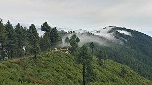 Forestry in Pakistan - Lajbouk Lower Dir