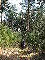 Landgoed Valkenberg DSCF2920.JPG