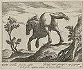 Landschap met paard uit Lazio. NL-HlmNHA 1477 53011509.JPG