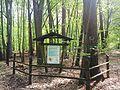 Las mieszany w nadlesnictwie Lopuchowko.jpg