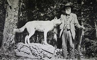 Last Adirondack Wolf (1893).jpg