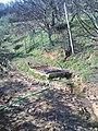 Lavandaro - panoramio.jpg