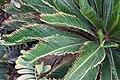 Leaves (3308556419).jpg