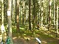 Levashovo Memorial Cemetery 06.JPG