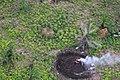 Liberia, Africa - panoramio (110).jpg