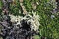 Lichen (20568496941).jpg