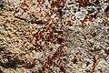 Lichen (43478743174).jpg