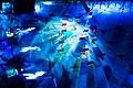 Light Up the Winter Night - panoramio.jpg