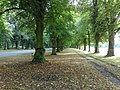 Lime tree avenue,clumber park - panoramio.jpg