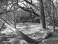 Links Wood - geograph.org.uk - 1227695.jpg