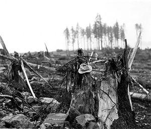 1958 Lituya Bay megatsunami - Damage caused by the 1,720 ft megatsunami