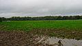 Longridge Wood - geograph.org.uk - 70495.jpg