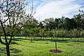 Looking N at Fruit Garden and Nursery - Mount Vernon.jpg