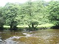 Looking west to east across the River Barle at Tarr Steps - geograph.org.uk - 926305.jpg