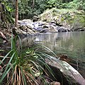 Lower Gwongoorool Rock Pools, Nerang River, Springbrook National Park, Gold Coast Hinterland, Queensland, Australia.JPG