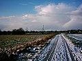Loxstedt - Feldweg im Winter 2004 a.jpg