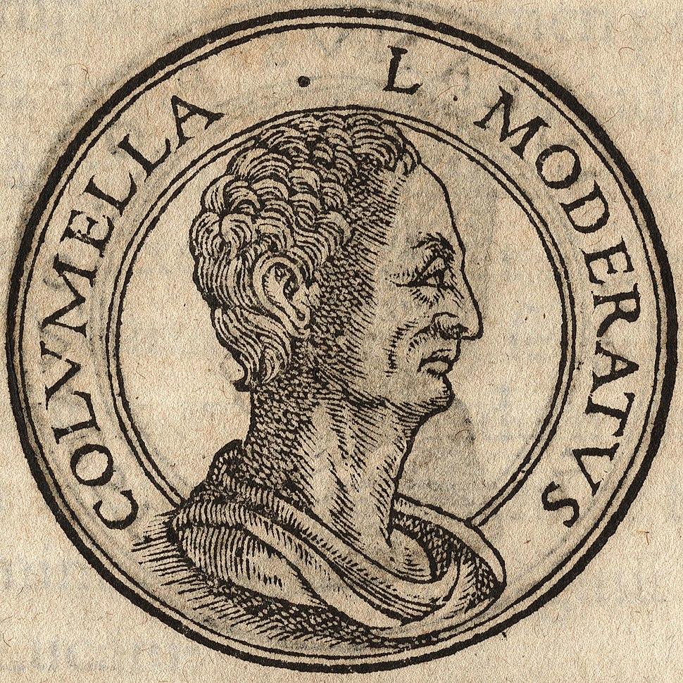Portrait of Lucius Junius Moderatus Columella from Jean de Tournes, Insignium aliquot virorum icones, Lyon, 1559