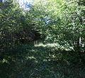 Mändjala forest, Saaremaa.JPG