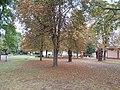 MAV Park in autumn, 2016 Dunakeszi-Gyartelep.jpg
