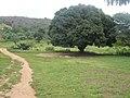 MUCAMBO-Povoado indigena.jpg