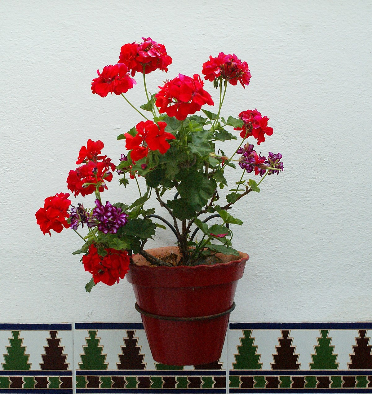 Maceta wikipedia la enciclopedia libre for Jardineras para arboles grandes