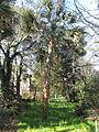 Magnolia Plantation and Gardens - Charleston, South Carolina (8556506700).jpg