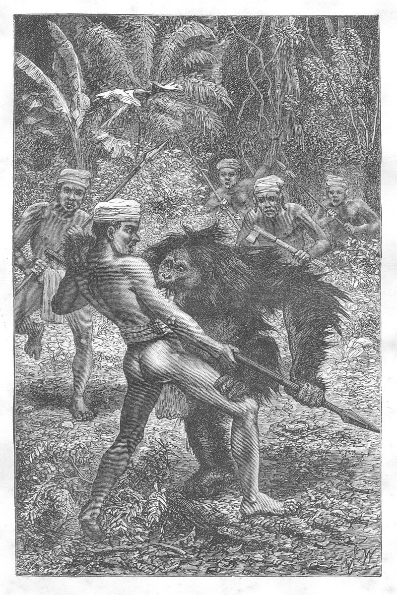 https://upload.wikimedia.org/wikipedia/commons/thumb/f/f2/Malay_Archipelago_Orang-Utan_attacked_by_Dyaks.jpg/800px-Malay_Archipelago_Orang-Utan_attacked_by_Dyaks.jpg