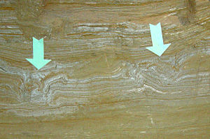Mammoth Site, Hot Springs - Cross-section of mammoth footprints at the Mammoth Site